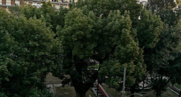 Napoli Piazza Cavour – vicino a tutte le facoltà a piedi o con le due linee della Metro situate di fronte casa